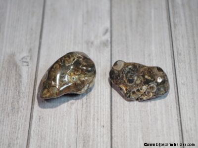 2 galets Agate Fossile
